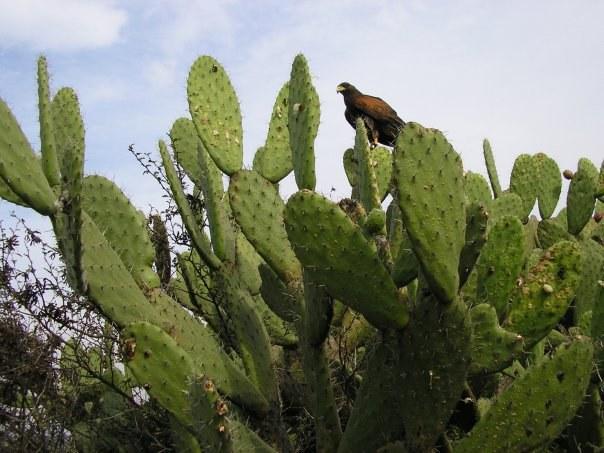 Сколько видов в семействе кактусов, науке не известно