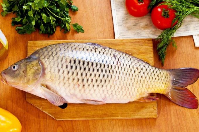 От какой рыбы бывает описторхоз
