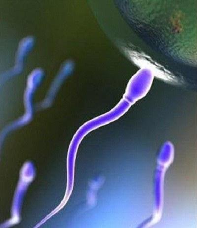 Сперматозоиды движутся к яйцеклетке