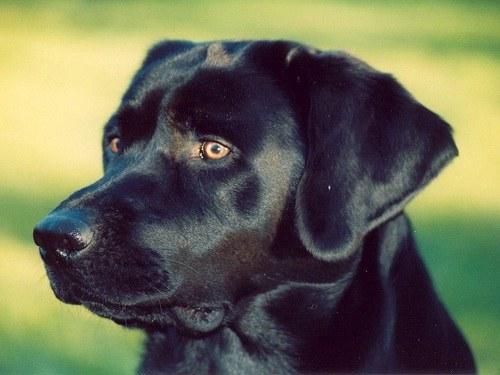 Найти свой дом собаке помогает нюх и зрительная память