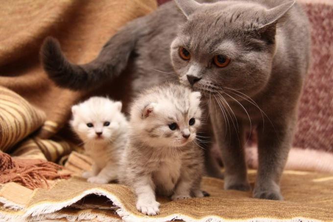 Как рождаются котята  в 2017 году