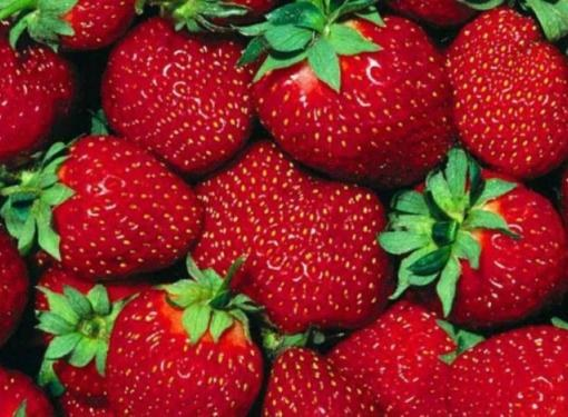 Everbearing strawberry varieties produce fruit from may to October