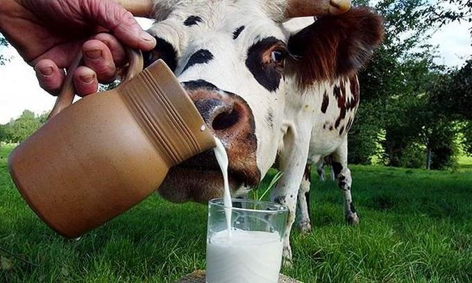Какое молоко можно пить