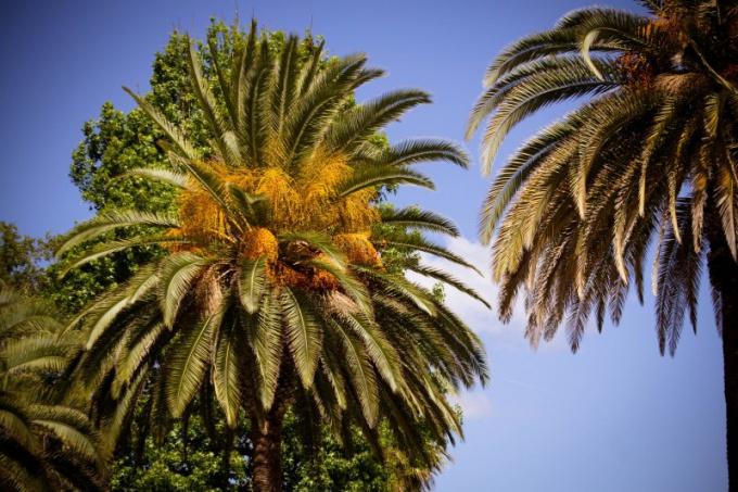 Красота пальм завораживает