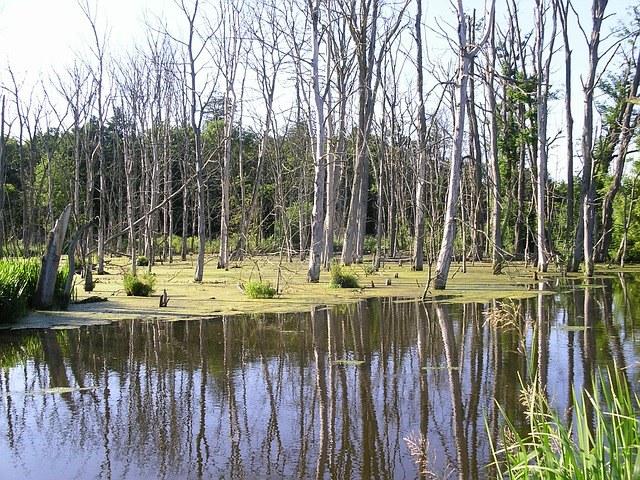 Опасные места на болоте