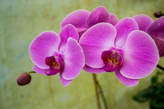 Орхидея - самое красивое и загадочное растение на земле