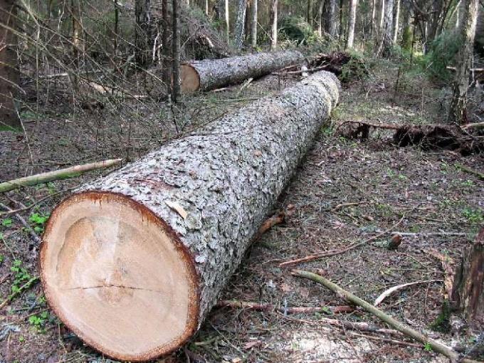 Как спиливать деревья на участке под корень