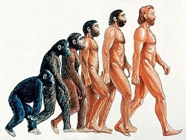 Биологическая эволюция