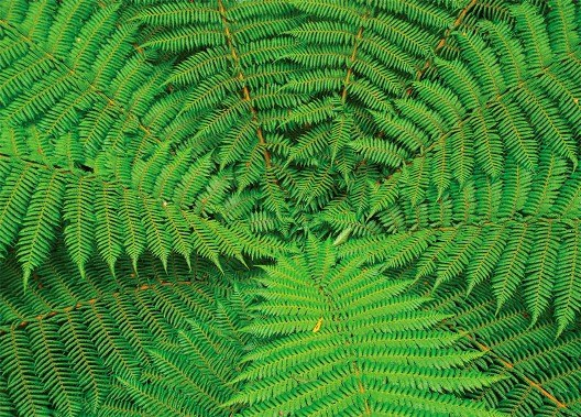 Уход за комнатными растениями и картинки растений 12