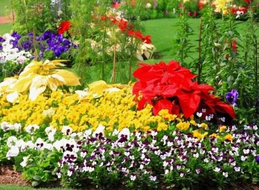 Ориентируясь на характеристики цветочных растений, можно создавать из них удачные комбинации