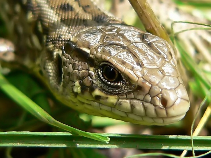 Какой яд у разных змей