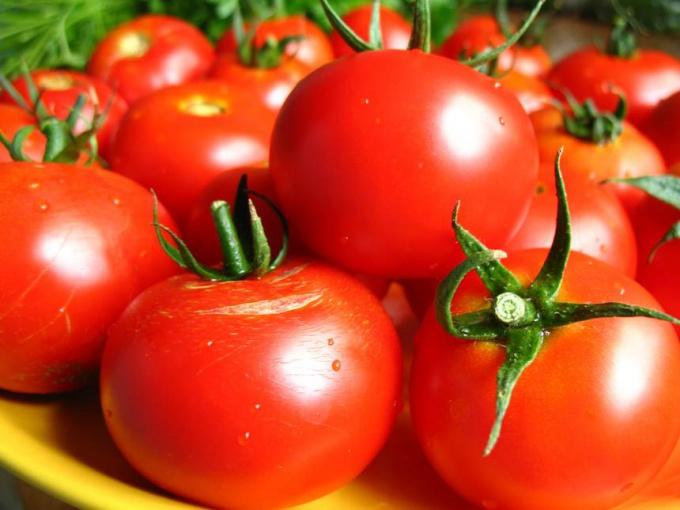 Как посадить томаты в теплицу, правильный уход за томатами