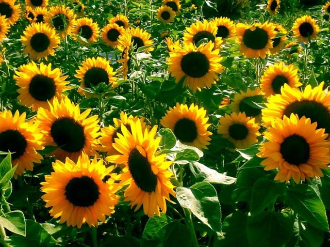Какие растения размножаются семенами