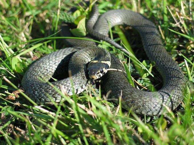 Ядовитые змеи не опасны, если их не тревожить