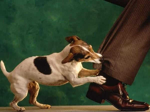 Когда начинать дрессировать собаку