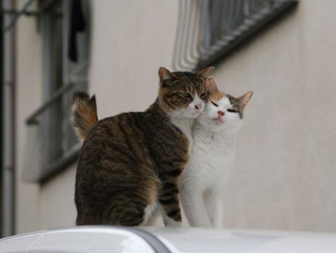 Как вязать кошку