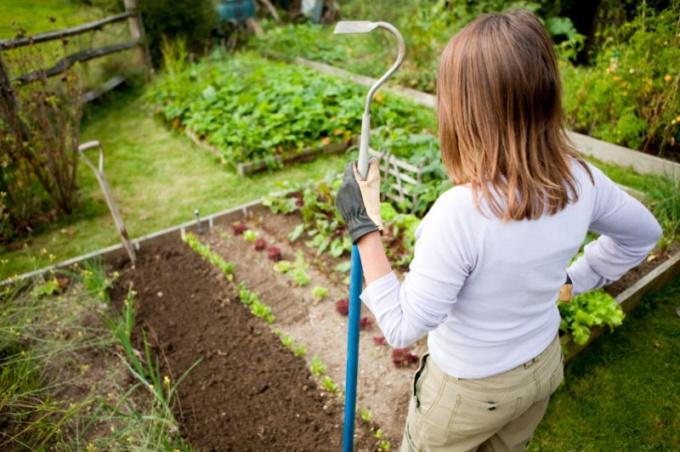 Как ухаживать за огородом