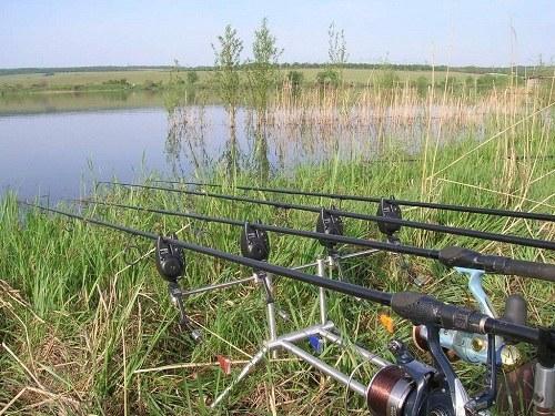 Хищную рыбу лучше ловить на живца