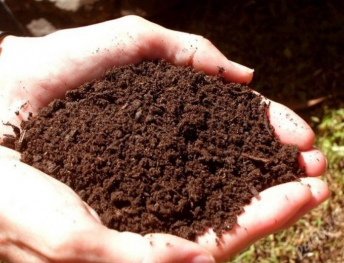 How to neutralize soil acidity