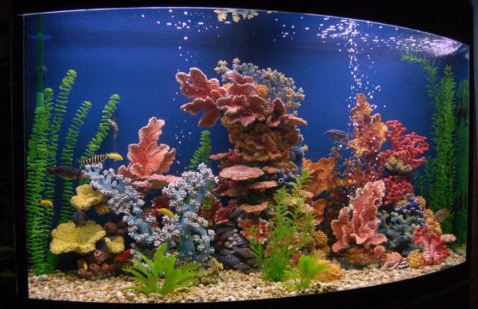 Как декорировать аквариум