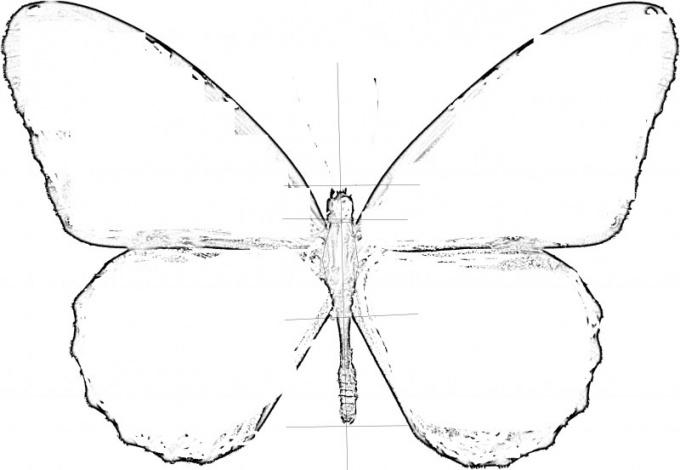 Нарисуйте контуры крыльев