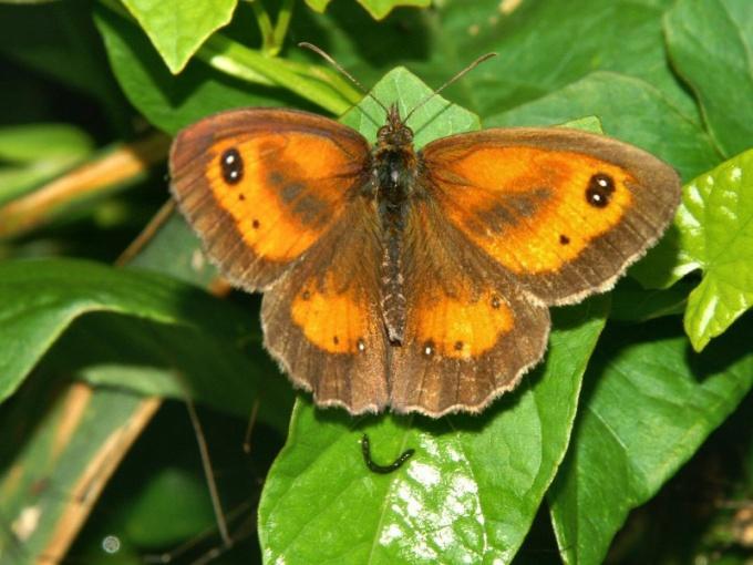 Рассмотрите картинку с изображением бабочки