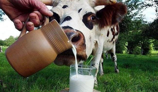 Почему детям до года нельзя давать молоко
