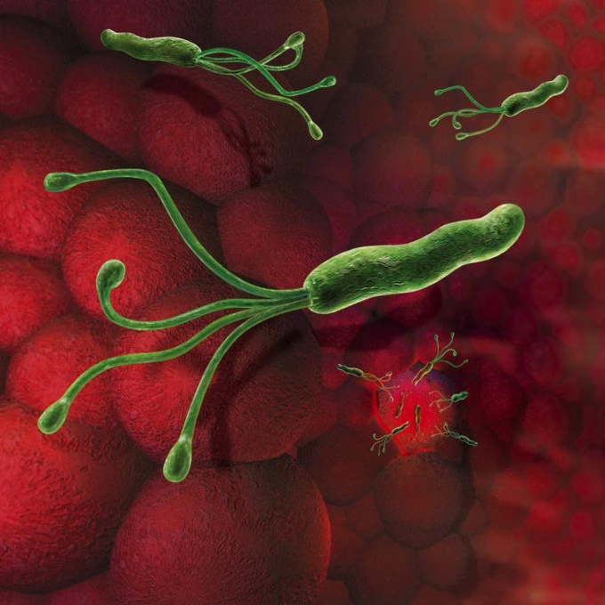 How is the Helicobacter pylori