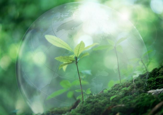 Чем отличается современная экология
