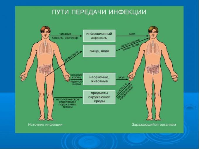 Пути инфицирования