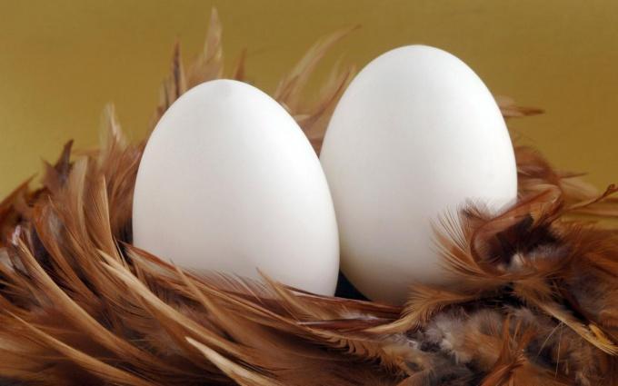 Яйца: польза или вред, как хранить