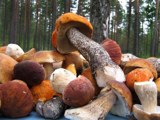 Как переработать грибы