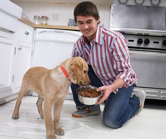 Собака и заботливый хозяин