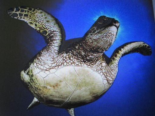 Как передвигается черепаха