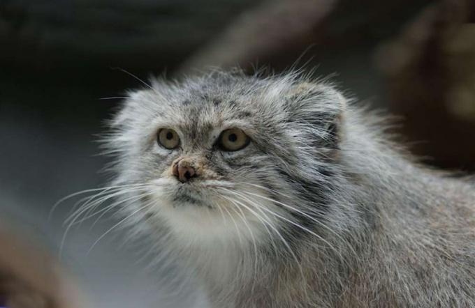 Многие животные из семейства кошачьих ведут ночной образ жизни