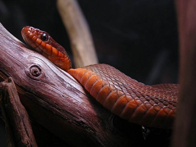 Как передвигается змея