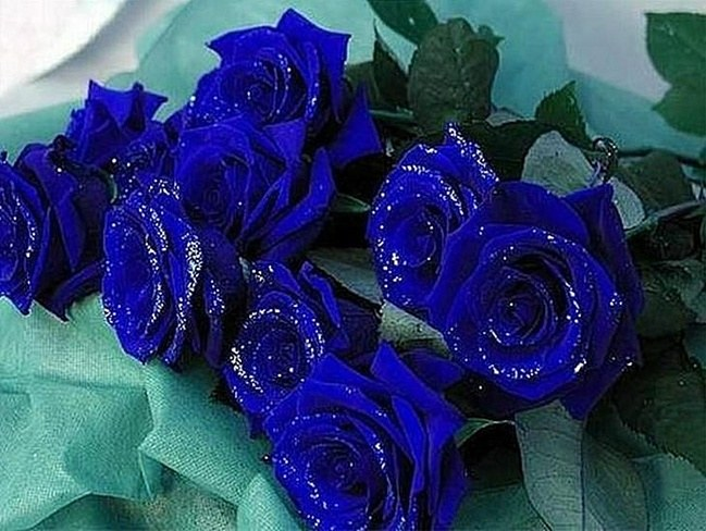 A bouquet of blue roses as a token for a sweetheart
