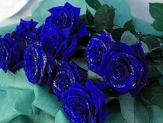 Букет синих роз, как знак внимания для возлюбленной
