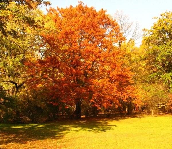 Деревья окрашены осенней листвой