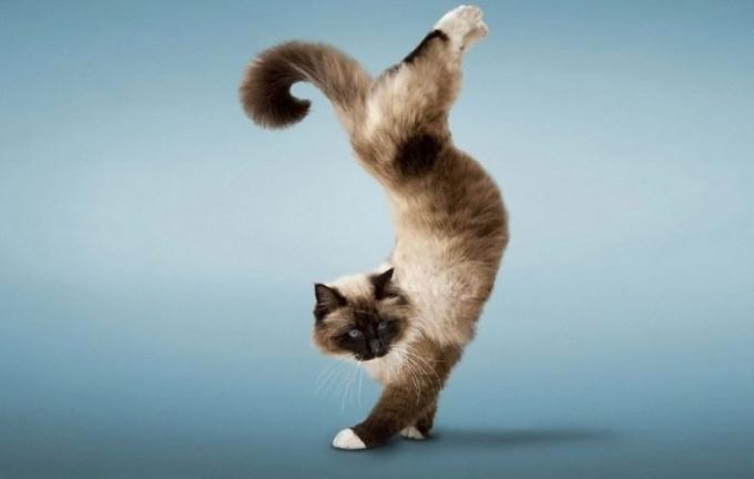 Как дрессировать кота