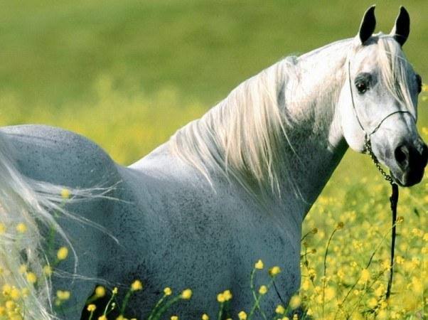 Как передвигается лошадь