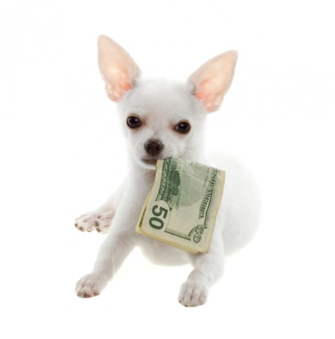 Как можно заработать любителям собак