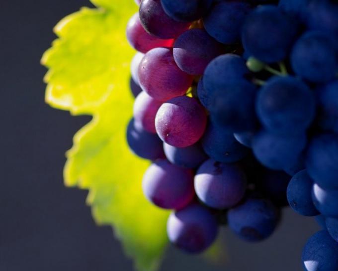 Защитить виноград от ос можно несколькими способами