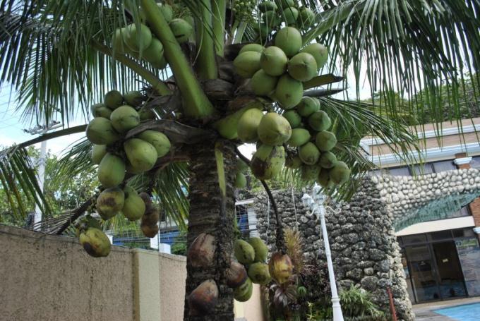 Какие полезные витамины содержит кокос