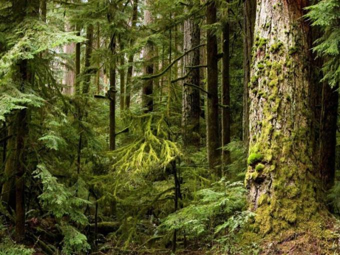 Что нельзя делать в лесу