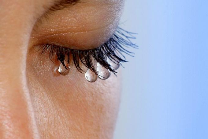Уменьшить слезотечение помогают примочки с отварами ромашки аптечной, алоэ или календулы