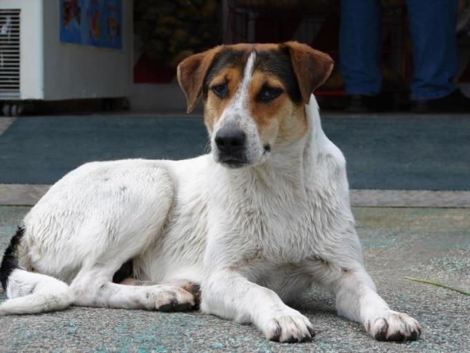 Почему мокрая собака сильнее пахнет псиной