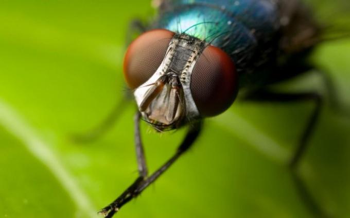 Липучка для мух позволяет избавиться от этих насекомых