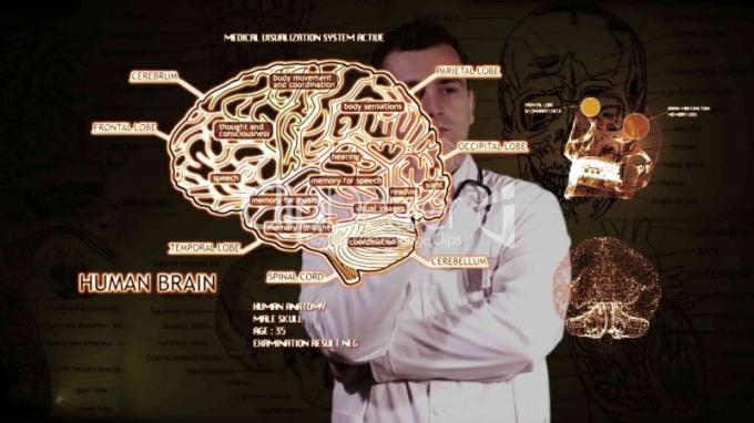 Как изменяется мозг человека, когда он думает