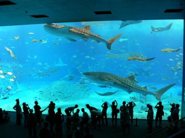 В аквариуме Протаса